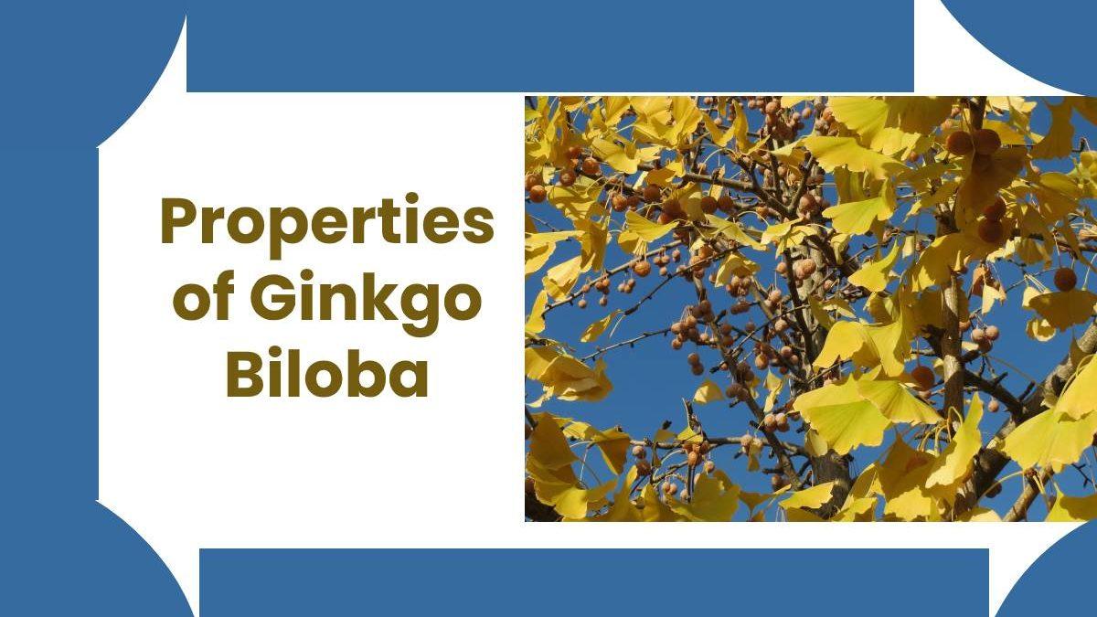 Properties of Ginkgo Biloba