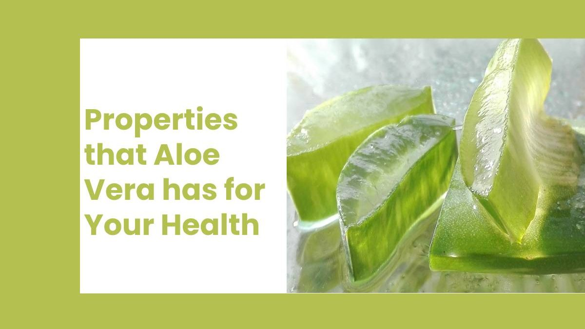 Properties that Aloe Vera has for Your Health
