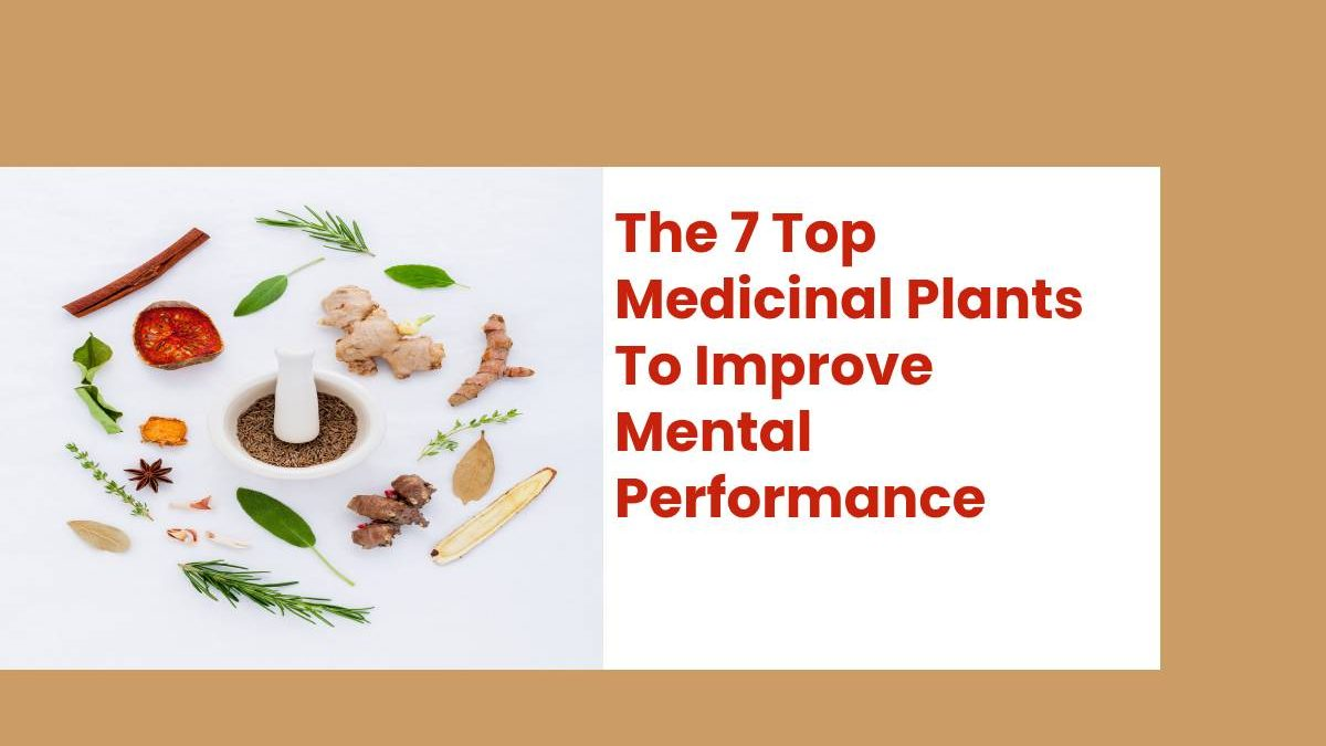 The 7 Top Medicinal Plants To Improve Mental Performance