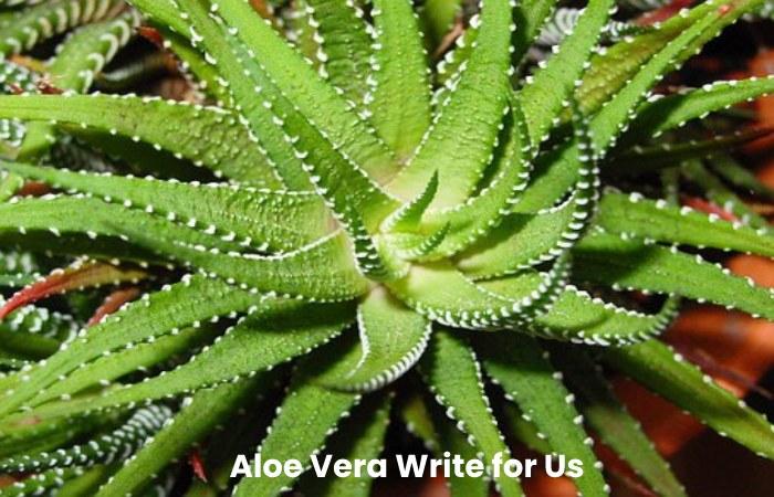 Aloe Vera Write for Us